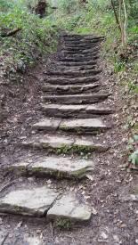 Steps through the woodland.