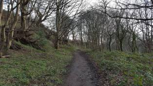 Woodland area looking up to Lichfield Road open space.