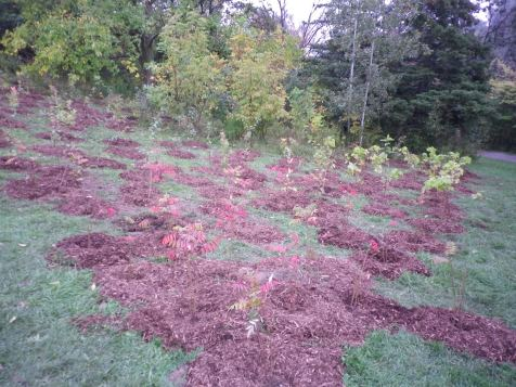 cedarvale-choir-retreat-and-tree-planting-068