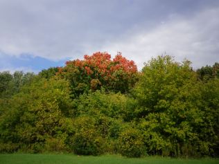 cedarvale-fall-colours-064