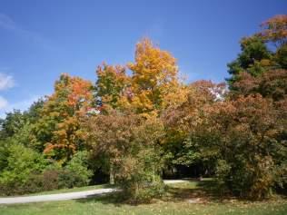cedarvale-leaves-2015-004