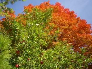 cedarvale-leaves-2015-018