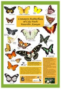 Butterflies of City Park thumbnail