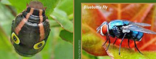 Biodiversity Illustrated in the guidebook
