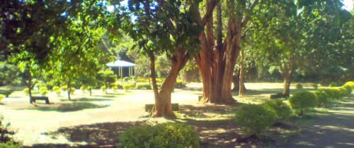 Markhamia featured by cngarachu