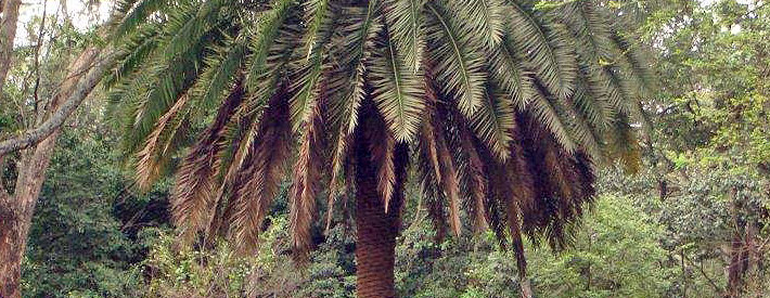 Palm tree featured