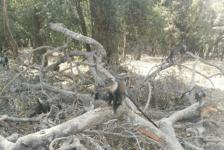 Monkey on felled tree