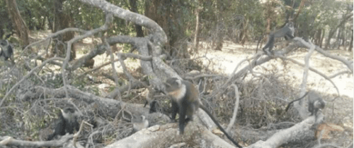 Monkey on felled tree