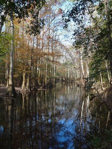 Cedar Creek III