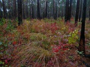 Site-6-Bluff-Trail-in-fall