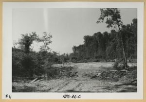 Logging at Congaree in the 1970s