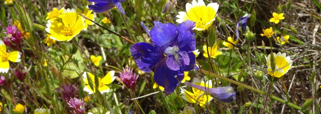 Serpenting grassland flowers