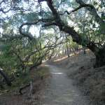 Live Oak Trail