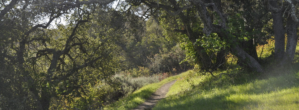 Oak-shaded trail