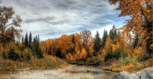 AutumnWilliamPagie