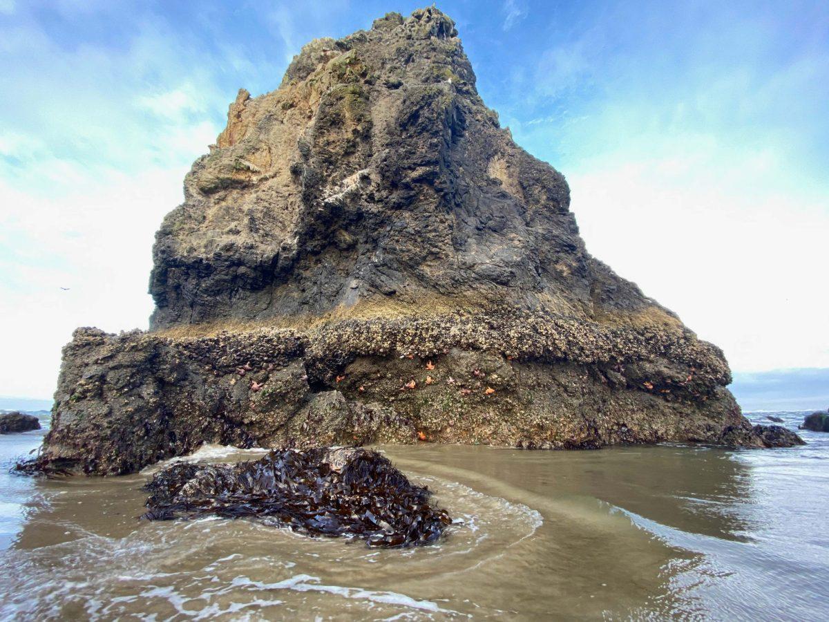 Starfish-Rock-Andrew-Krauss