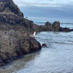 Starfish-Seagulls-and-Low-Tide-Andrew-Krauss-1