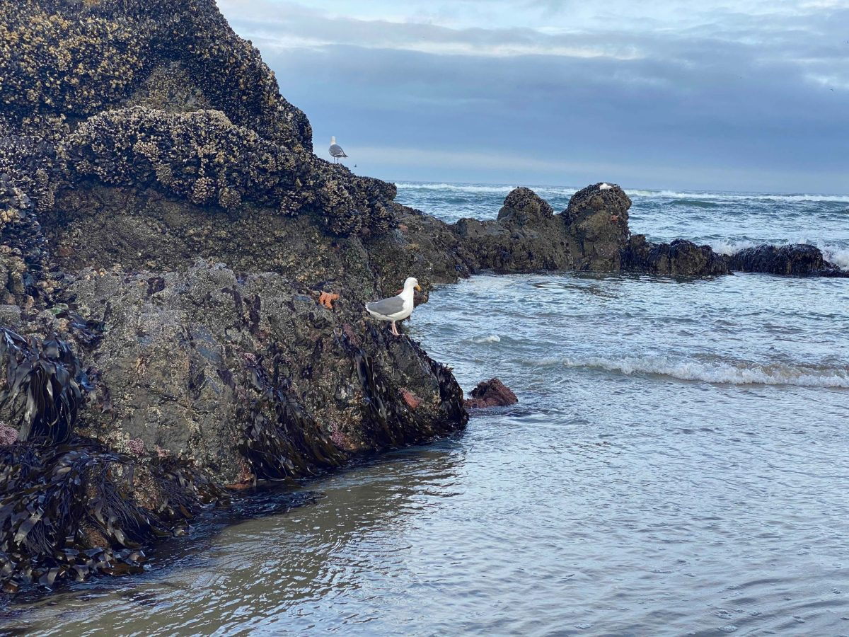 Starfish-Seagulls-and-Low-Tide-Andrew-Krauss