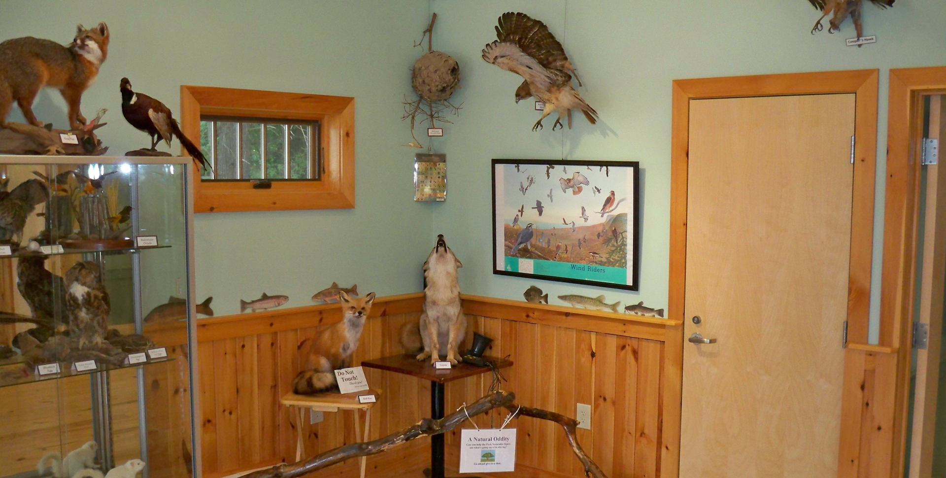 Nature Center Exhibits