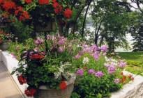Garden Party - KR004_2_2_2