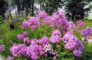 Garden Party - KR007