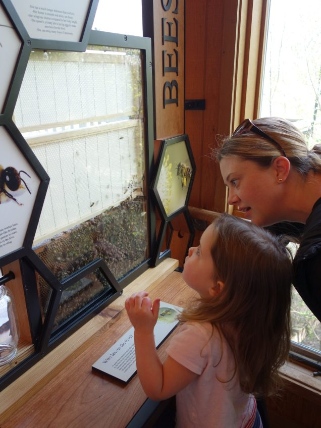 Checking out the new bee display