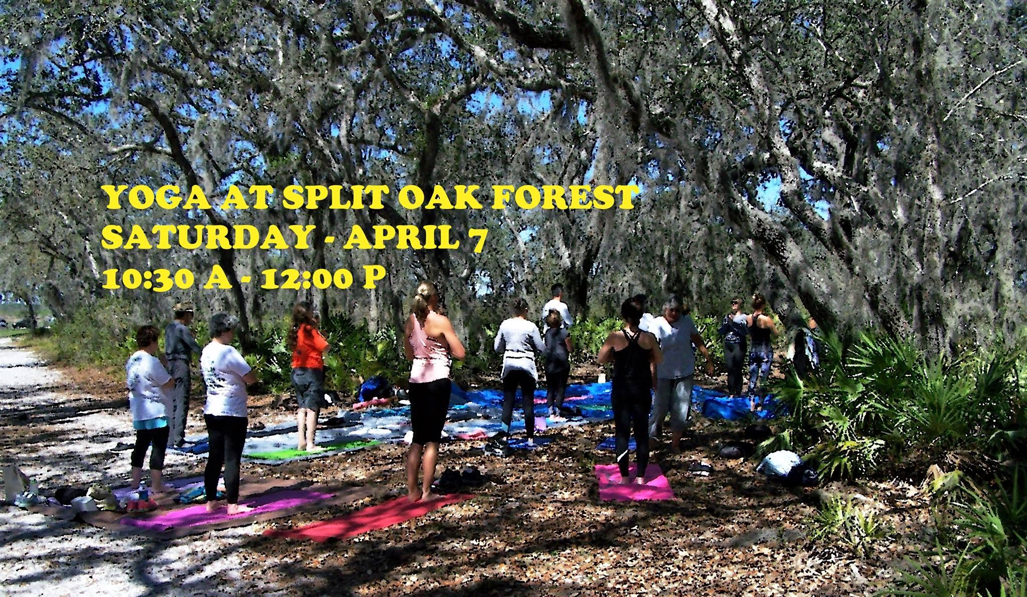 Yoga At Split Oak Forest Friends Of Split Oak Forest