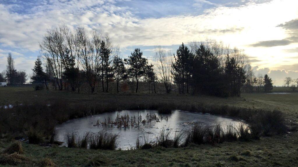 Dale Road Pond