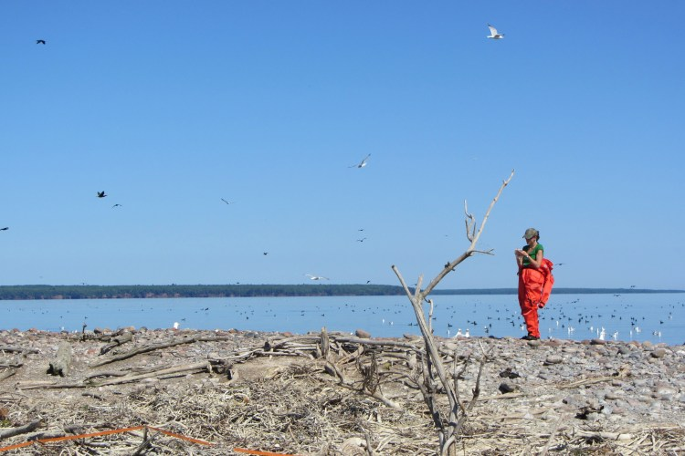 Researching the Birds of Gull Island