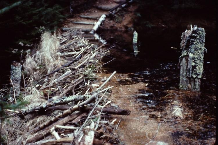 Beaver dam on Outer Island