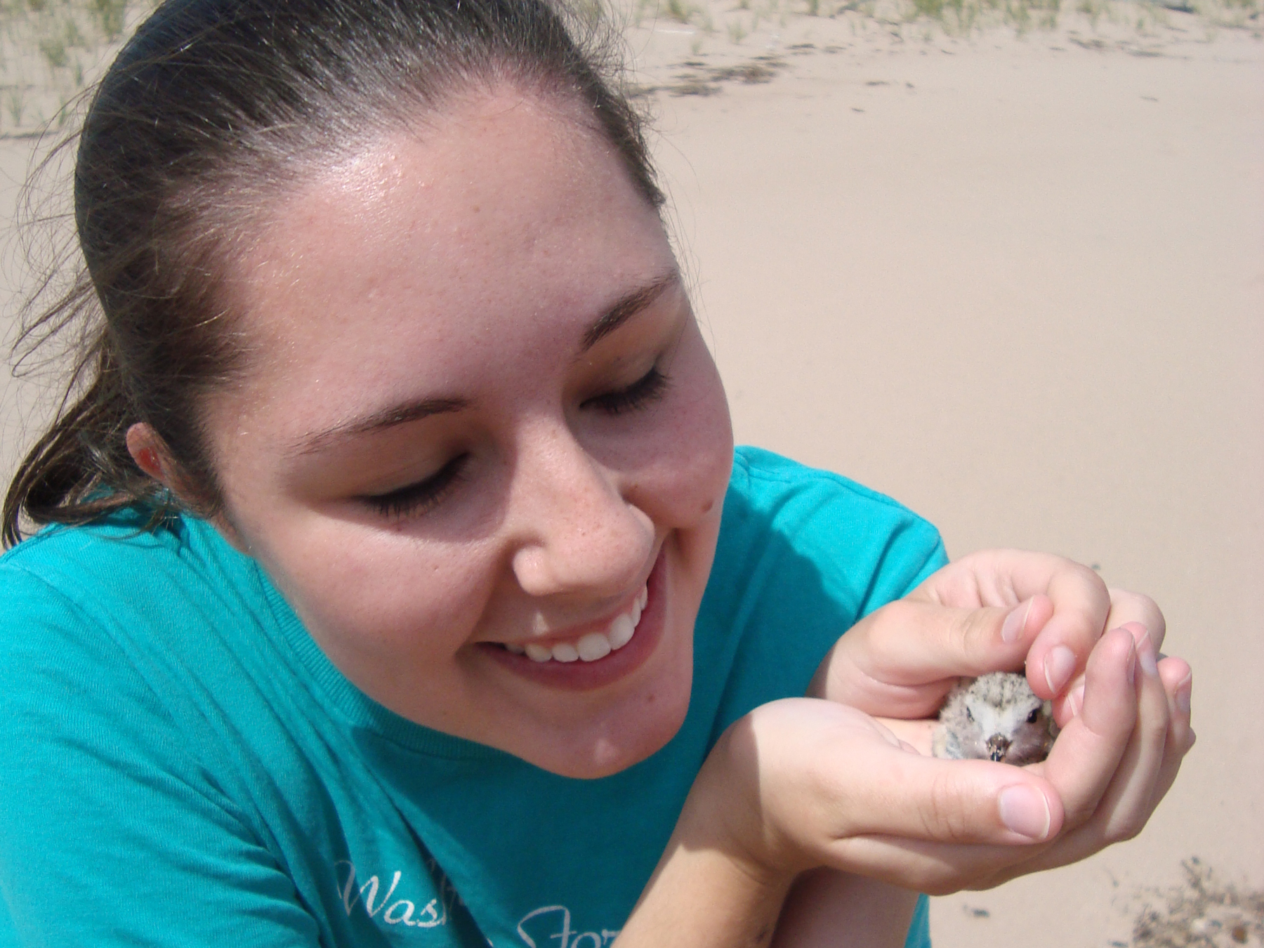 Jennie cradles a Piping Plover chick