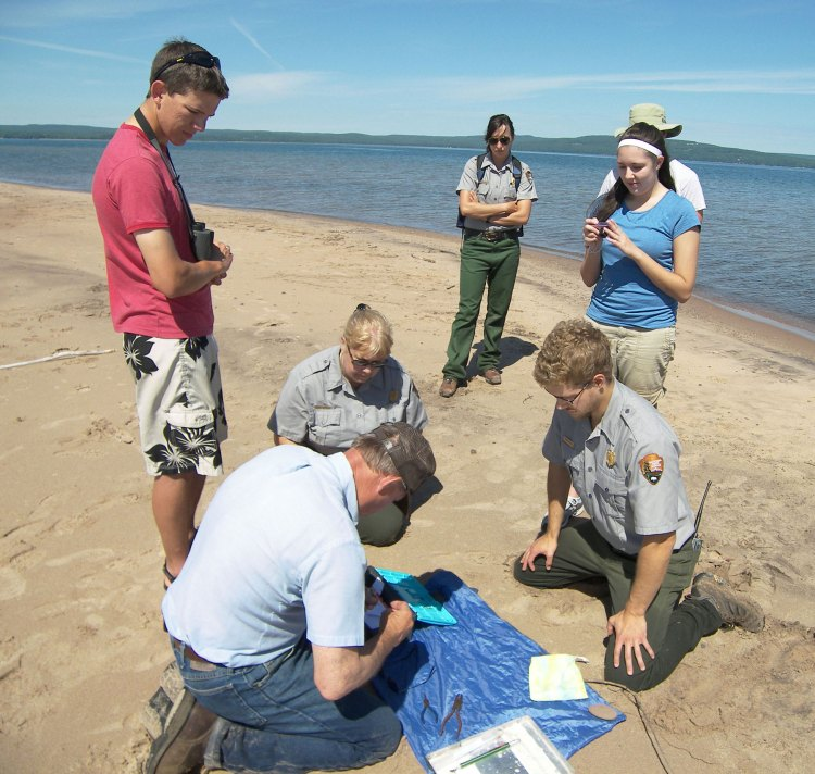 Forrest oversees the banding of plover chicks on Long Island