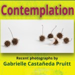 Contemplation Opens along with Magical Realism 5.6!