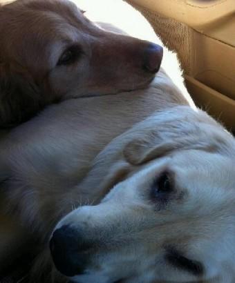 intimatedogs