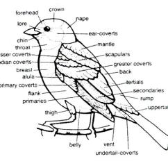 Golden Eagle Skeleton Diagram Bard Heat Pump Wiring Body Diagram, Eagle, Get Free Image About