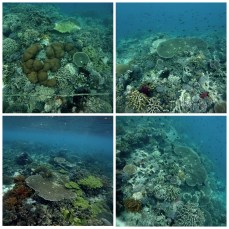 Underwater pictures from Pulau Tujuh. The pictures didn't do it justice. Sorry!