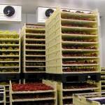 Depozite frigorifice refrigerare