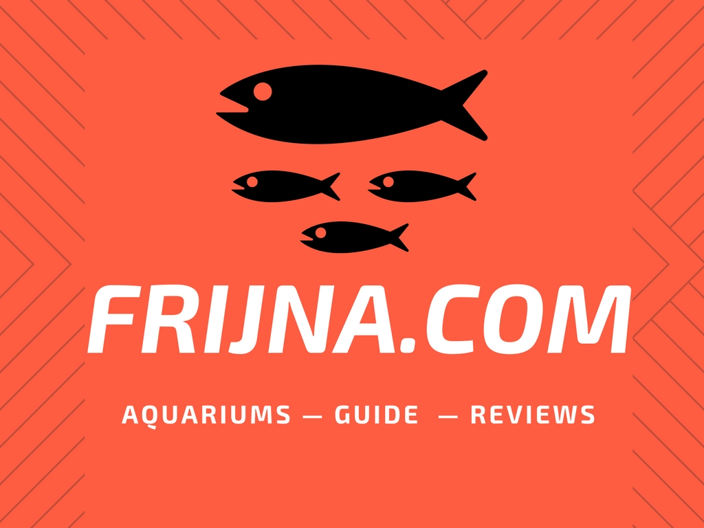 best fish tanks for beginners 2018 buying guide
