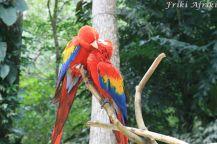 Takie papużki
