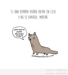 Problemas de animales2