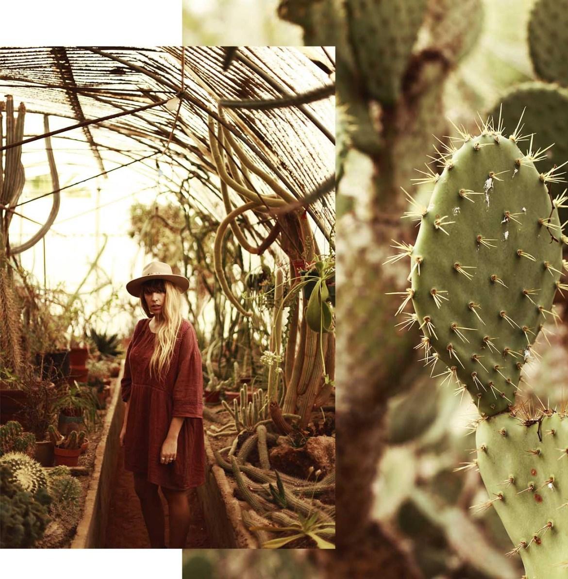 cacti-garden-palmsprings