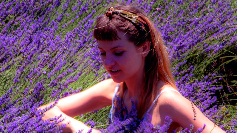 Introducing: Lavender Fields