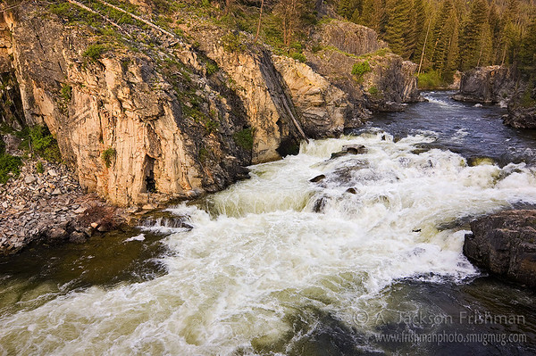 A Chinook salmon leaps up Dagger Falls on Idaho's Middle Fork of the Salmon.