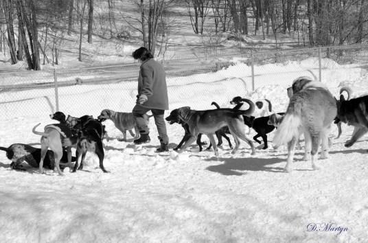 Elizabeth with the Frisky Dog pack