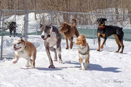 Dog Power Run