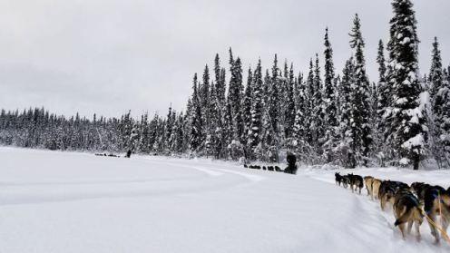 dog sled rides with Frisky Pups Sled Dog Rides