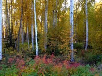 BnB-boreal-forest