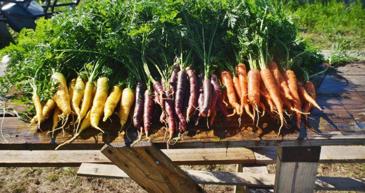 cropped-carrot-range1.jpg