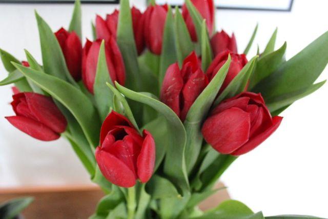 tulipaner, foedselsdag