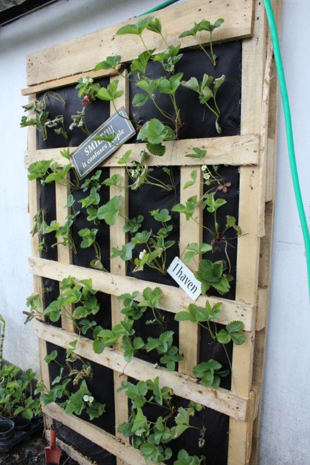 vertikal-jordbaerbed, jordbaer, i-haven